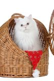 Kitten in the rattan carrier Stock Image
