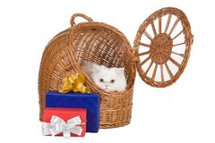 Kitten in the rattan carrier Royalty Free Stock Image