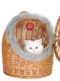 Kitten in the rattan carrier Stock Photo