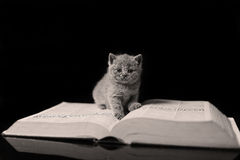 Kitten reading a book Royalty Free Stock Images