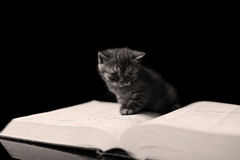 Kitten reading a book Stock Photography