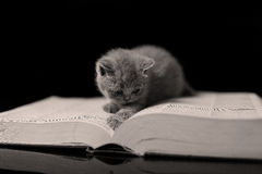 Kitten reading a book Royalty Free Stock Photography