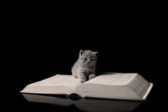 Kitten reading a book Royalty Free Stock Image