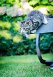 Kitten ready for jump. Kitten playing in a garden ready for a jump of a garden chair Stock Photos