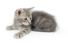 Kitten ready to pounce Royalty Free Stock Photo