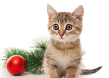 Kitten with red ball and twig of fir Royalty Free Stock Photos