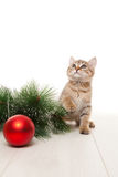Kitten with red ball and twig of fir Stock Photos