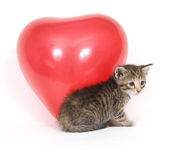 Kitten and red balloon Stock Photos