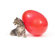 Kitten and red balloon Stock Image
