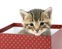 Kitten in a red box Royalty Free Stock Images