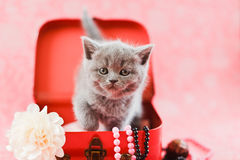Kitten in the red box Royalty Free Stock Photo