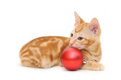 Kitten and red christmas ball Stock Photo