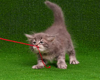 Kitten with red clew Royalty Free Stock Images
