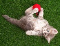 Kitten with red clew Royalty Free Stock Photo