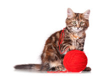 Kitten with red clew of thread Stock Photos