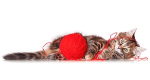 Kitten with red clew of thread Royalty Free Stock Image