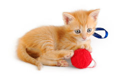 Kitten of red color with blue ribbon and red clay Stock Photography