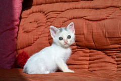 Kitten on the red couch Royalty Free Stock Image