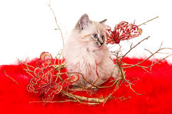 Kitten on a red fluffy cover with butterflies. Kitten sitting on a red fluffy cover with butterflies Royalty Free Stock Image