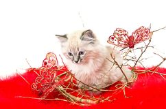 Kitten on a red fluffy cover with butterflies Stock Photos