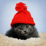 Kitten in a red hat Stock Images