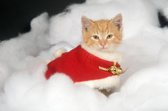 Kitten in red holiday vest Stock Images
