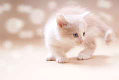 Kitten red light Royalty Free Stock Photography
