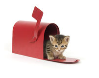 Kitten in a red mailbox Royalty Free Stock Photo
