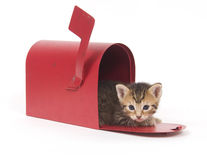 Kitten in a red mailbox Royalty Free Stock Photography