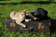 Kitten red on an old suitcase with books and a hat