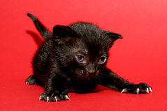 Kitten on red Royalty Free Stock Photography