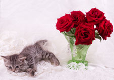 Kitten with red roses Stock Photos