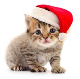 Kitten in a red Santa Claus hat. royalty free stock photo