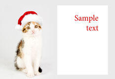 Kitten in a red santa hat and Banner. Sample text. Merry Christmas royalty free stock image