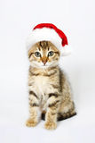 Kitten in a red santa hat. Isolated on white background royalty free stock photography
