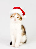 Kitten in a red santa hat. Stock Photography