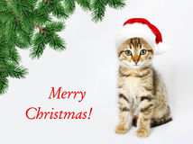 Kitten in a red santa hat. Merry Christmas. Happy New Year royalty free stock photography