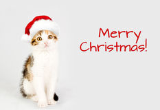 Kitten in a red santa hat. Merry Christmas Royalty Free Stock Photos