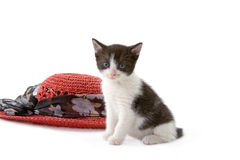 Kitten and a red straw hat Stock Photography