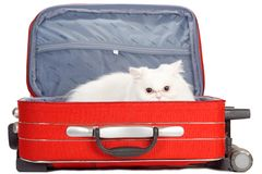 Kitten in the red suitcase. White kitten in the red suitcase Stock Photos