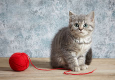 Kitten and red thread ball Royalty Free Stock Photo