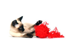 Kitten with red yarn Stock Image