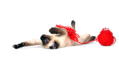 Kitten with red yarn Stock Images