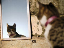 Kitten reflecting on a mirror Royalty Free Stock Photos