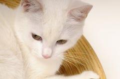 Kitten relaxing in bowls Stock Photos