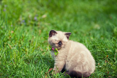 Kitten relaxing on the grass Royalty Free Stock Image