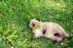 Kitten relaxing on the grass Royalty Free Stock Photo