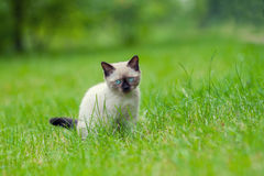 Kitten relaxing on the grass Stock Photo