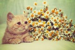 Kitten relaxing near flowers Stock Photos