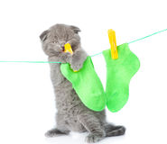 Kitten removes dried after washing underwear with rope. isolated Royalty Free Stock Photos
